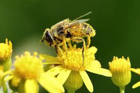 pollen in pool
